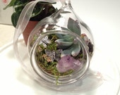 Hand Blown Glass Succulent Terrarium Hanging Terarium