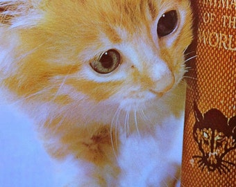 1970s GINGER KITTEN and BOOK