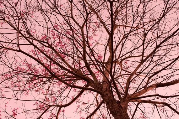 Digital Download Flowering Branches Girls Room decor Nursery Wall Art Pink flowers tree picture pink wall art blooming branches pink sky