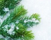 1 oz. Balsam Fir Fragrance Oil