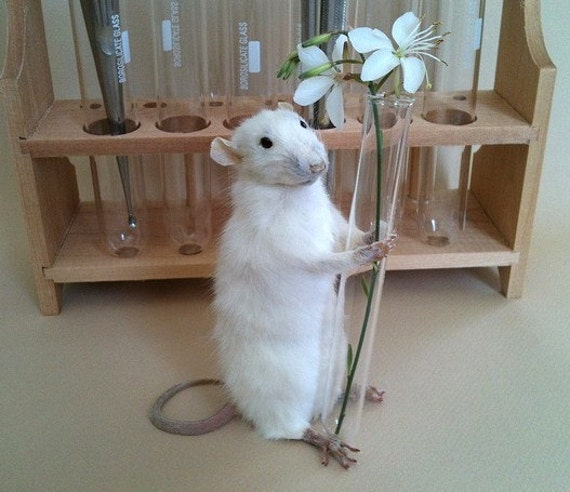 Taxidermy Lab Rat Vase