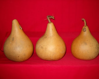 3 -  6 inch 2nd Quality Martin Gourds ( Dried & Cleaned)