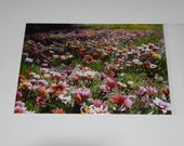 Postcard Greeting Card Wildflower Nature Photography 5x7 with white envelope Stationary card SET of CARDS