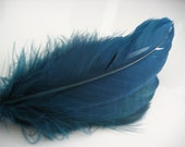 Teal Goose Nagoire Feathers, 10 Loose Feathers
