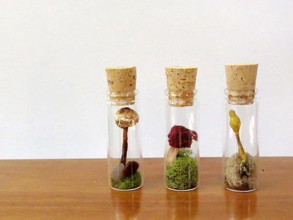 Wild Mushroom Specimens, Dried Mushrooms, Curiosities, Instant Natural Collectio, Specimen Jars, Miniature Terrariums, Mushroom Terrariums