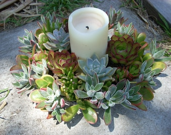 Succulent Centerpiece Weddings 10 inch diameter