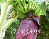 Special Order for Kimaada