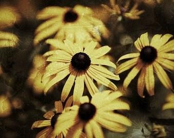 Black Eyed Susan Surreal - Photography --  8x12