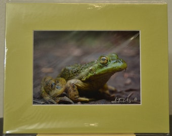 SALE - 5x7 prematted print - photograph - fine art - Yellow Eyes - Frog - Columbia River Gorge