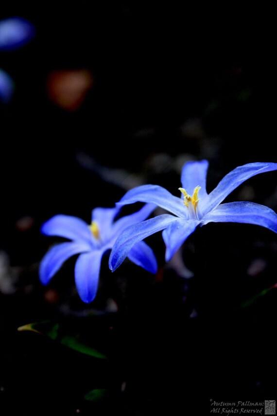 Dark Garden Violets: ForestBlackImages