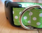 Dog Collar, Green, White, Polka Dot