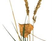 Grass with leaf   /  8x10