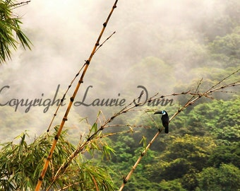 Toucan in bamboo forest