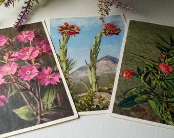 pretty in pink vintage postcard set of three