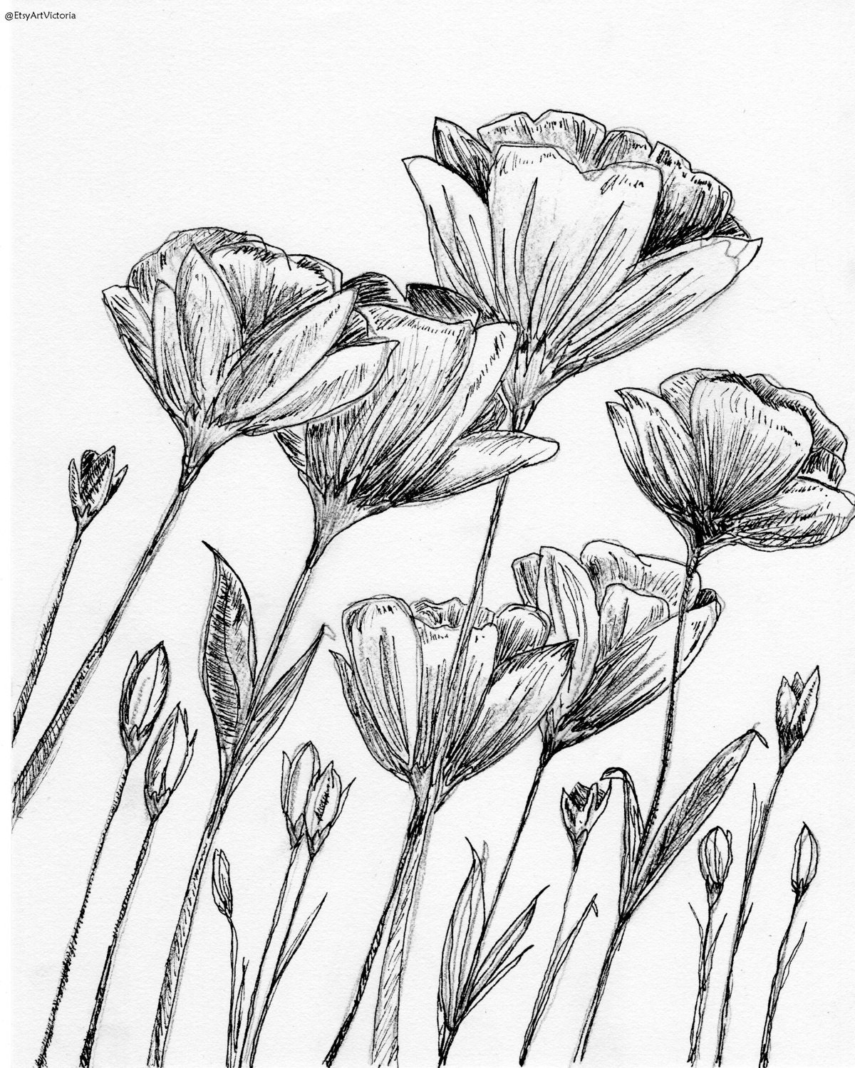 Flower Line Drawing Vintage : Hibiscus flower drawings tattoo design page my style