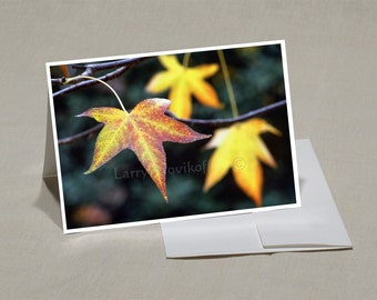Prints-Greeting Cards-5x7 Set of-5-Original Photos-Blank Inside--Prints from 8x12-Nature and Outdoor Photos- SET 010