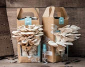 Back to the Roots Grow at Home Mushroom Garden ( Kit ) - BacktotheRootsGarden