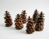 20 Red Brown MINIATURE TREES Terrarium Miniature Village Dollhouse Natural Pine Cone Décor - EarthBeauties