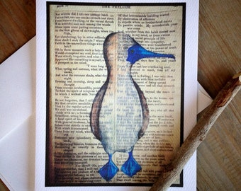 Blue Footed Booby Note cards: Blank Stationery