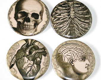 Human Anatomy Vintage Illustrations - Set of 4 Large Fridge Magnets