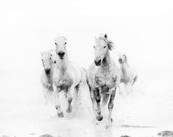 "Nature Photography, Minimalist Black and White Photography, Modern Horse Art Print, Nature Art, White Horses Running""Ghost Riders"""