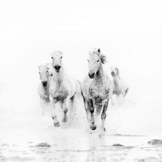 Pferd Kunst Schwarz-Weiß-Drucke Naturfotografie Pferd