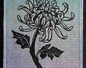 Chrysanthemum Flower Print