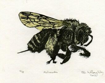 Melissodes Bee Linocut - Handprinted Fuzzy Bee - Bee Biodiversity Print Collection