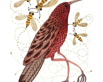Bee Eater Print, bird art illustration, giclee art print, watercolor print, marsala wine red