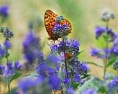 Butterfly Garden Photo -Flower Photography -Country Garden -Butterfly Gift -Purple Orange Decor -Gift for Her -Colorado Fine Art Photography