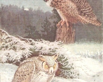 Vintage Bird Print, Book Plate, Great Horned Owl, Arctic Owl, Allan Brooks, Antique Bird Illustration, 1930s