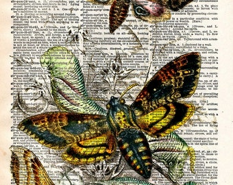 Vintage Book Print - Death's Head Moth - Upcycled Antique Book Print - Woodland Art Butterfiles Insects Print