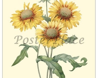 GALARDIA ART CARD - Botanical print reproduction 1025