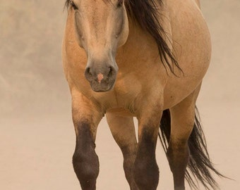 Out of the Dust - Fine Art Wild Horse Photograph - Wild Horse - Sand Wash Basin - Fine Art Print