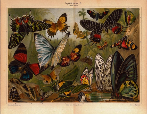 Butterflies and Moths  Antique Chromolithograph Lepidoptera Natural History Art Entmology