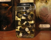 Preserved Black & White Striped King Snake Specimen