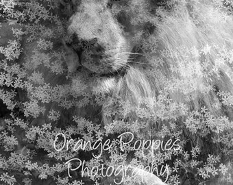 Lion Flowers Double Exposure Photograph *choose your size*