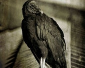 Vultures, 5x7 Fine Art Photography, Bird Photography, Black and White Photography, Nature Photography - CindiRessler