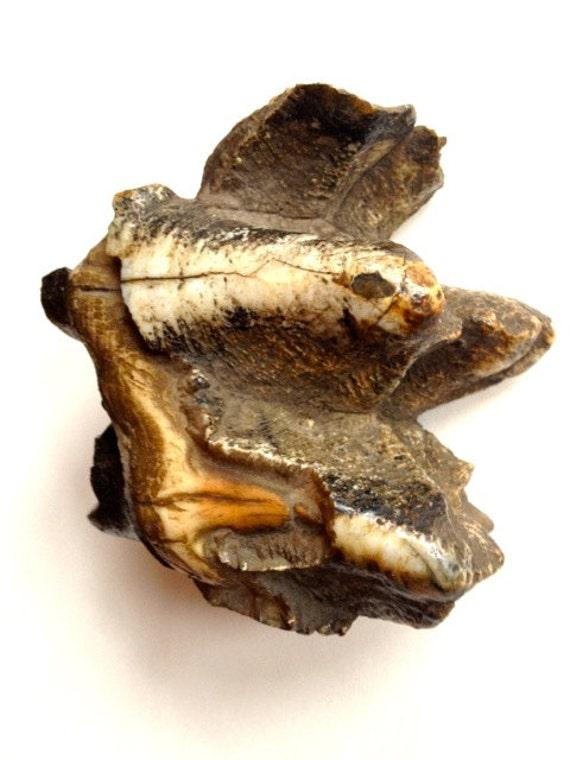 Mastodon fossil tooth, paperweight, fossil collector, Proboscidea, Mammoth, Megafauna