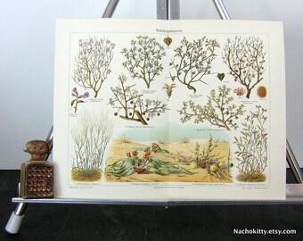 1870s Desert Botantical Chromolithograph Print Vibrant Color