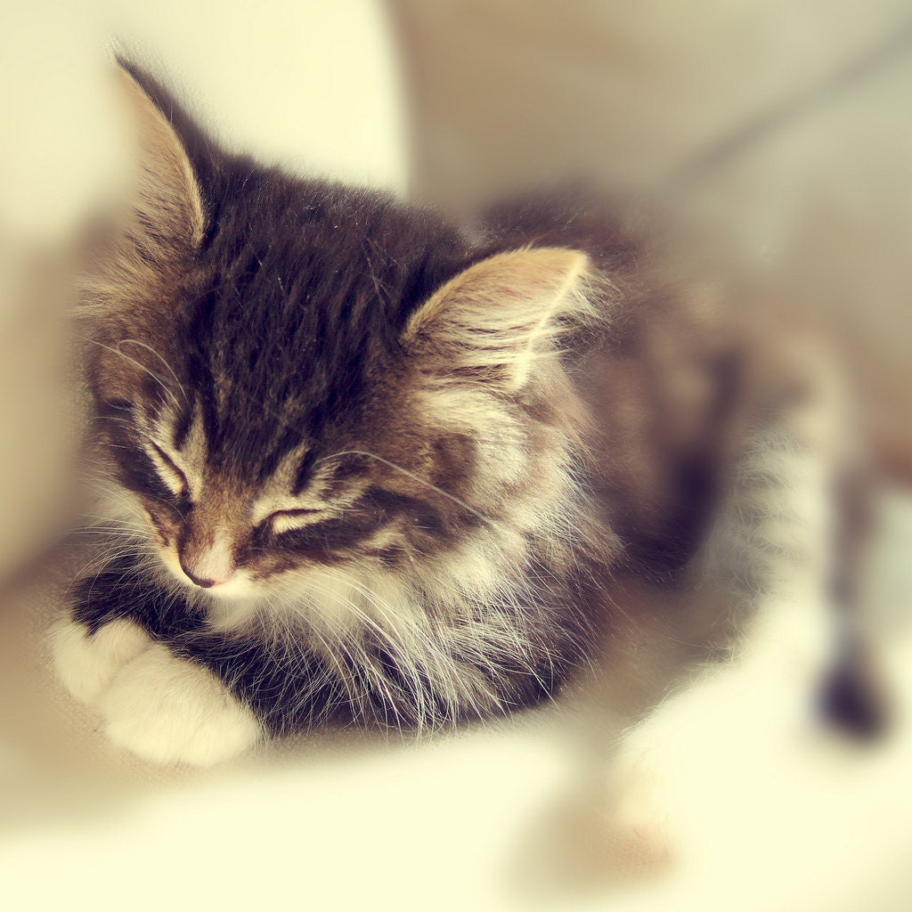Cute Kittens with Stuffed Animals