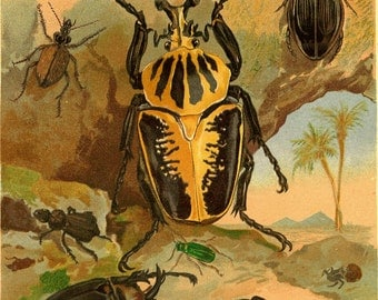 1883 Antique Entomology Print Color Lithograph Insects Beetles
