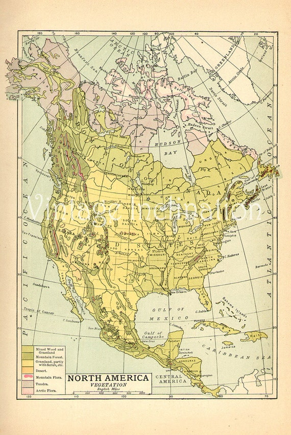 Vintage USA map QUALITY 1907 United States of America