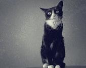 My Cat: Stunned Confused Dazed. Print 12x12in (30x30cm) - goenetix