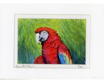 Signed numbered PARROT Watercolor Print