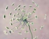 Fine Art Photograph, Queen's Anne Lace Photo, Macro Art, Flower Photo, Gardener, Light Pink, Sage Green, Shabby Chic Art, Square 8x8 Print