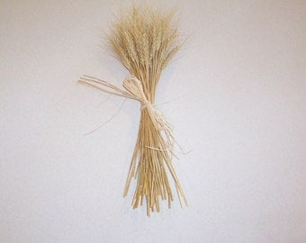 Dried Wheat Bundle for Weaving, Weddings or Decorating 50 Stalks