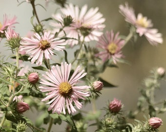 Flower Photography, Autumn Decor, Nature Photography, Autumn Photography, mauve, flower wall art, nature decor - Autumn Hush