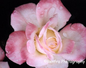 Pink Rose - Fine Art Print - Floral Photography - Flower Art Print - Flower Photo -  Altered Art - Pink - Wall art - Home Decor - Renfro