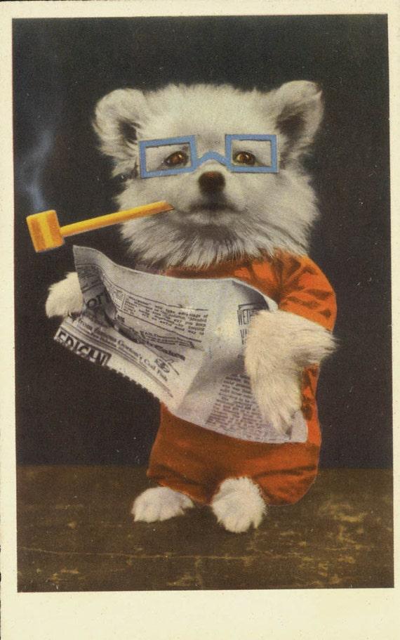 vintage postcard Pipe SMoking Newspaper Reading Dog